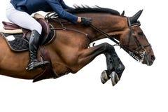 Paard die, RuiterdieSporten springen, op Witte Achtergrond worden geïsoleerd Royalty-vrije Stock Foto's