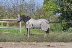 Paard die vliegmasker en lichaamsdeken dragen Stock Foto's