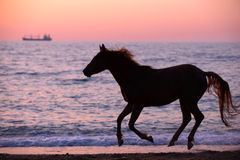 Paard die water doornemen Royalty-vrije Stock Foto