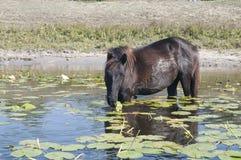 Paard die waterlily bladeren weiden royalty-vrije stock fotografie