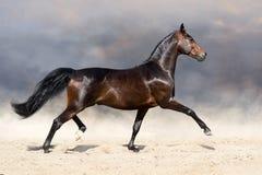 Paard die in woestijn draven royalty-vrije stock foto