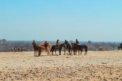 Paard die zich bij Giza-Piramides verzamelen royalty-vrije stock afbeelding