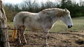 Paard die zich in de zon bevinden Stock Afbeelding