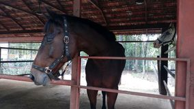 Paard die zich in loods bij tuin bevinden royalty-vrije stock foto