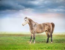 Paard die zich op weiland over bewolkte hemel bevinden Stock Afbeelding