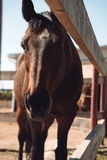 Paard die zich in openlucht bevinden Opzij het kijken Stock Foto
