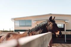 Paard die zich in openlucht bevinden Opzij het kijken Royalty-vrije Stock Afbeeldingen