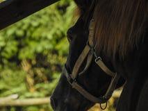 Paard Diepe Close-up vanuit een Invalshoek stock afbeelding