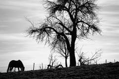 Paard door boom Stock Fotografie