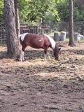 Paard door boom stock foto