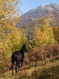 Paard door de herfst Stock Fotografie