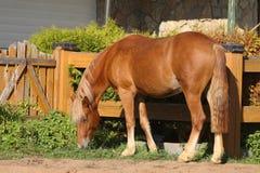 Paard in dorp Stock Afbeeldingen