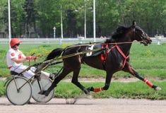 Paard dravend ras in de motiezomer Stock Foto's