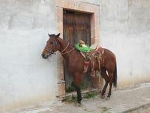 Paard in een Mexicaanse pueblo royalty-vrije stock foto's