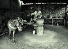 Paard in een Mosterdolie Ghani Royalty-vrije Stock Foto