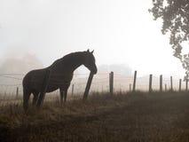 Paard in een nevelig ochtendweiland Stock Foto's