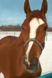 Paard in een platteland Stock Afbeelding