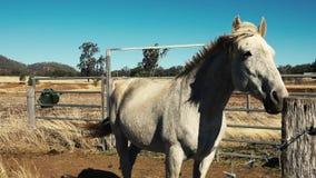 Paard in een platteland stock video