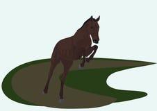 Paard in een sprong Stock Afbeelding