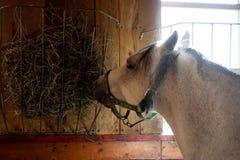Paard in een stal stock foto's