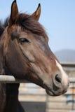 Paard in een stal stock afbeelding