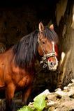 Paard in een stal royalty-vrije stock afbeeldingen