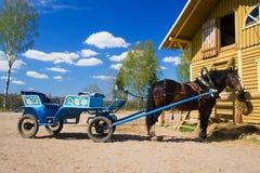 Paard in een uitrusting 1 Stock Foto