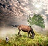 Paard in een weide Royalty-vrije Stock Afbeeldingen