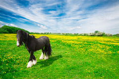 Paard in een weide stock foto's