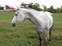Paard in een weiland stock afbeeldingen