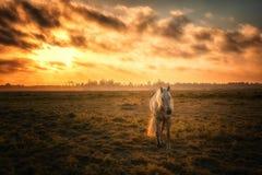 Paard in een Weiland met Oranje Zonsondergang royalty-vrije stock fotografie