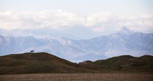 Paard en bergen in achik-Tash Royalty-vrije Stock Afbeelding