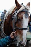 Paard en een regelmatige hand royalty-vrije stock fotografie
