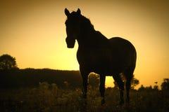 Paard en een zonsondergang Stock Foto's