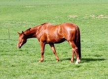 Paard en Gebied Royalty-vrije Stock Fotografie