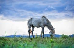 Paard en grasveld Royalty-vrije Stock Afbeelding