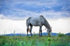 Paard en grasveld Stock Foto's