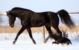 Paard en hond Stock Foto