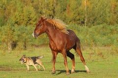 Paard en hond Royalty-vrije Stock Foto's