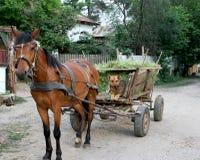 Paard en hond Royalty-vrije Stock Fotografie
