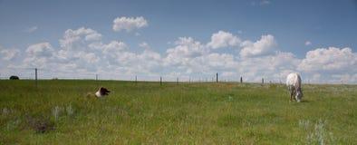 Paard en hond op een gebied met wolken Royalty-vrije Stock Foto's