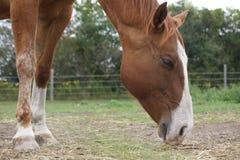 Paard en Hooi Stock Afbeeldingen