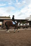 Paard en jockey Royalty-vrije Stock Afbeelding