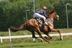 Paard en jockey Royalty-vrije Stock Foto's