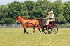 Paard en jol of Poney en val. stock foto's
