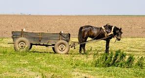 Paard en kar Royalty-vrije Stock Afbeeldingen