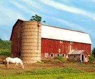 Paard en landbouwbedrijf Royalty-vrije Stock Foto's