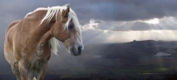 Paard en landschap Stock Fotografie