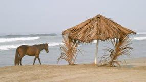 Paard en palapa op het strand Royalty-vrije Stock Foto's