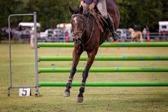 Paard en Rider In Show Jumping Ring-Gebeurtenis royalty-vrije stock afbeelding
